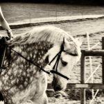 Merna-El-Mohasel-Pferdefreunde